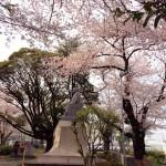 大山お花見 3大桜スポット!~桜のトンネル発見!~