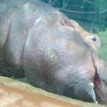 【画像125枚】この躍動感まさに野生!旭山動物園に行ってきた!北海道旭川